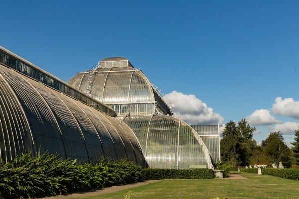 Palm House at Kew, photograph by John Clare