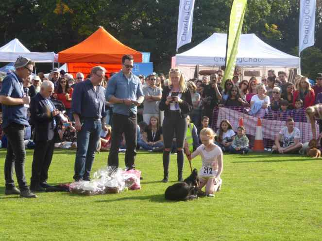 Wayne Sleep, Neil Dudgeon and David Caves judging My Dogs Got Talent__web