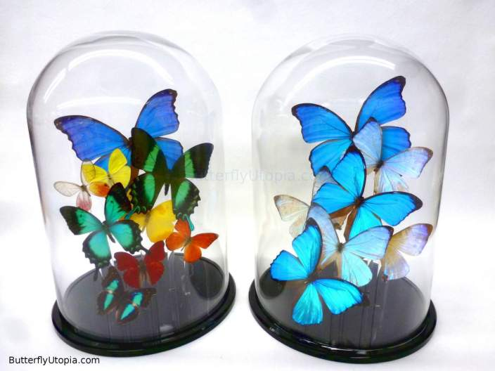 Butterflies in a glass dome__web