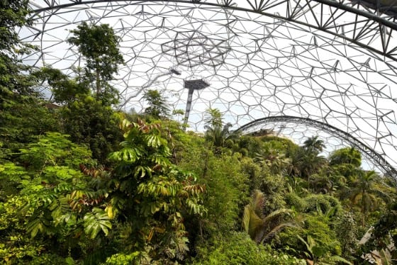 Rainforest biodome - web
