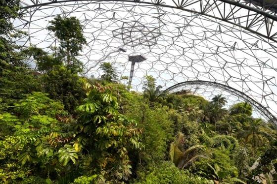 Rainforest biodome - web