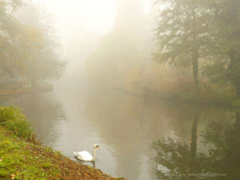 Swan on the lake at Chiswick house, Jon Perry - web