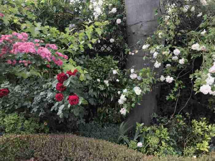 Tracy & Ian's garden 12__web