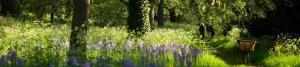 Kew Gardens Scenery