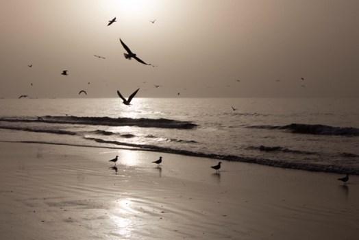 Landscapes-Seascapes-11