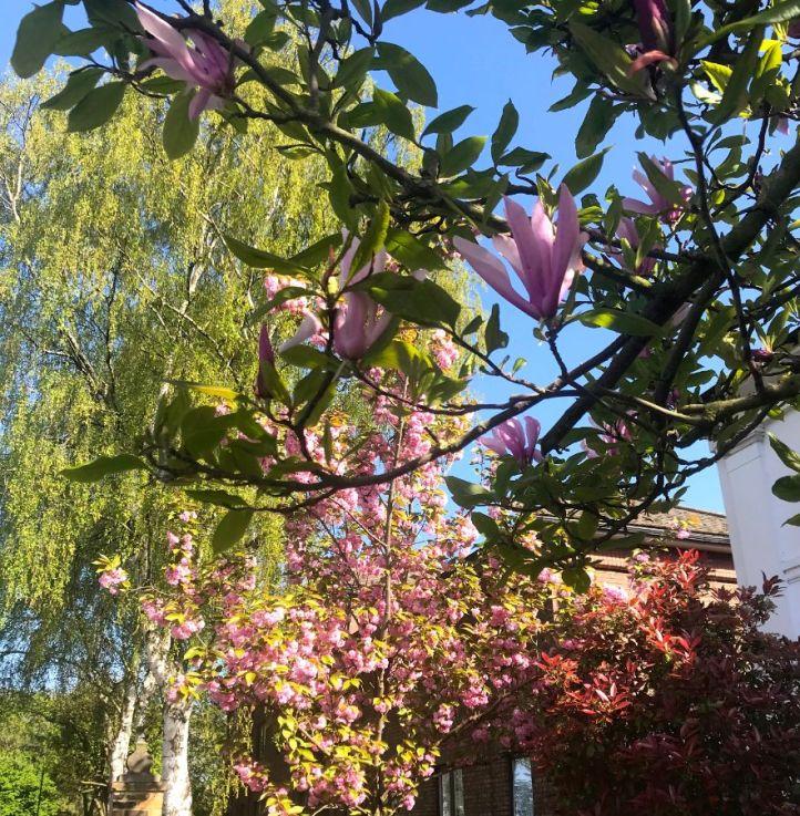 blossom 2_web