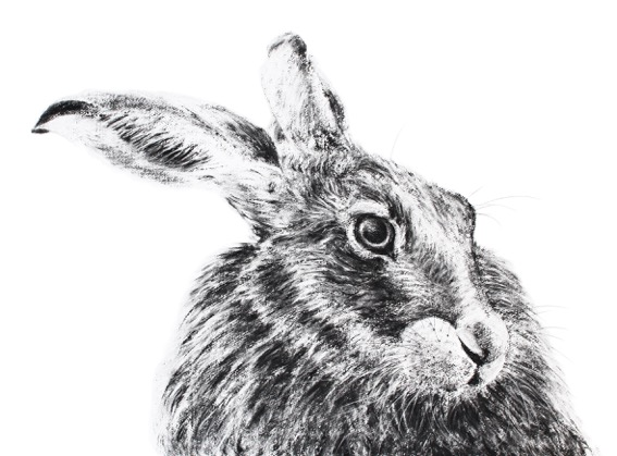 'Hare' by Jill Meager