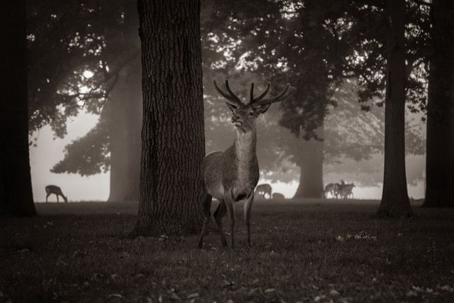 Animals - Alexandra Sharp 2