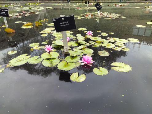 Kew pic pond