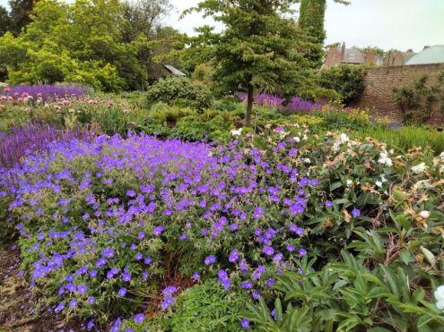 Kew pic purple flowers