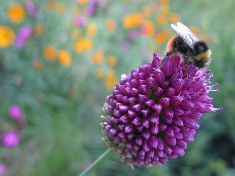 Natural World - Linda Reynolds, Bumble bee