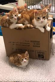 Kittens are in high demand