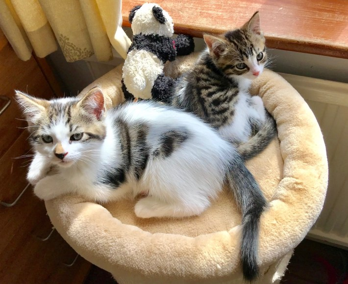 A pair of re-homed kittens