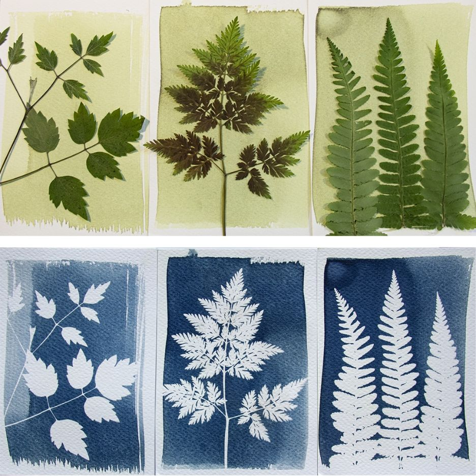 Botanopia-DIY-Cyanotype-kit-blueprints-with-plants-01