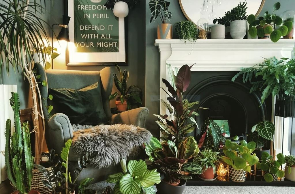 Lewis' living room full of plants