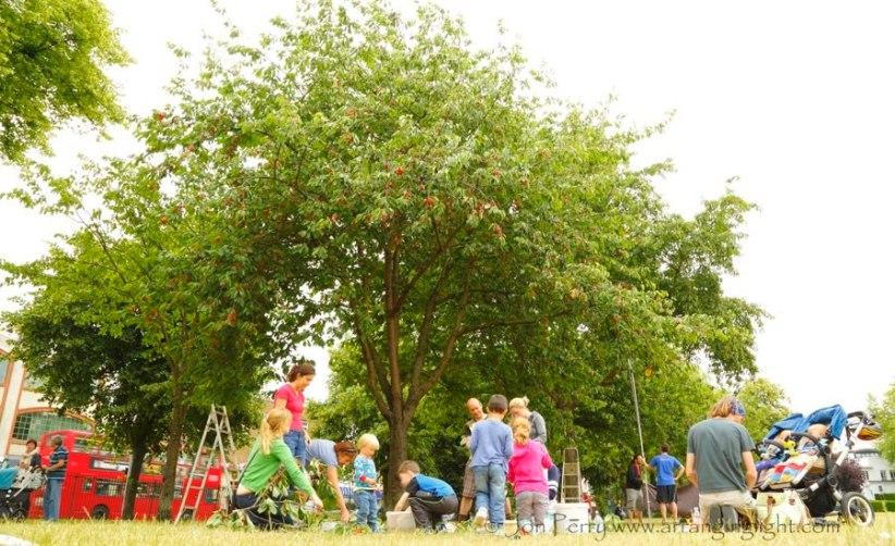 Abundance-London-community-project-Chiswick-cherry-harvesters