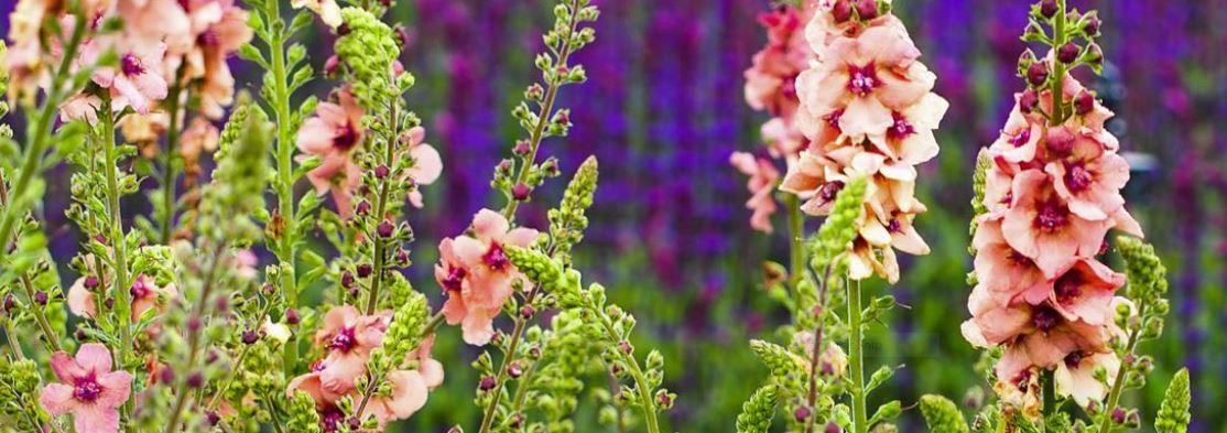 Hardy's Plants 1