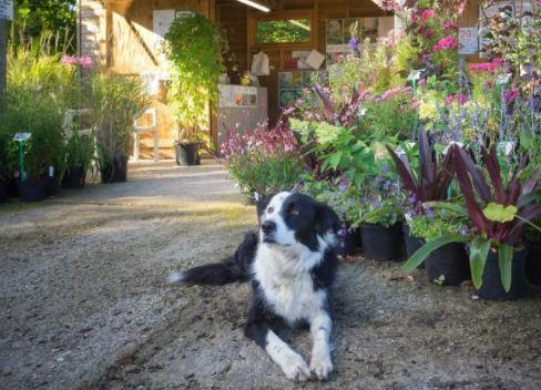 Sheepdog at Hardy's