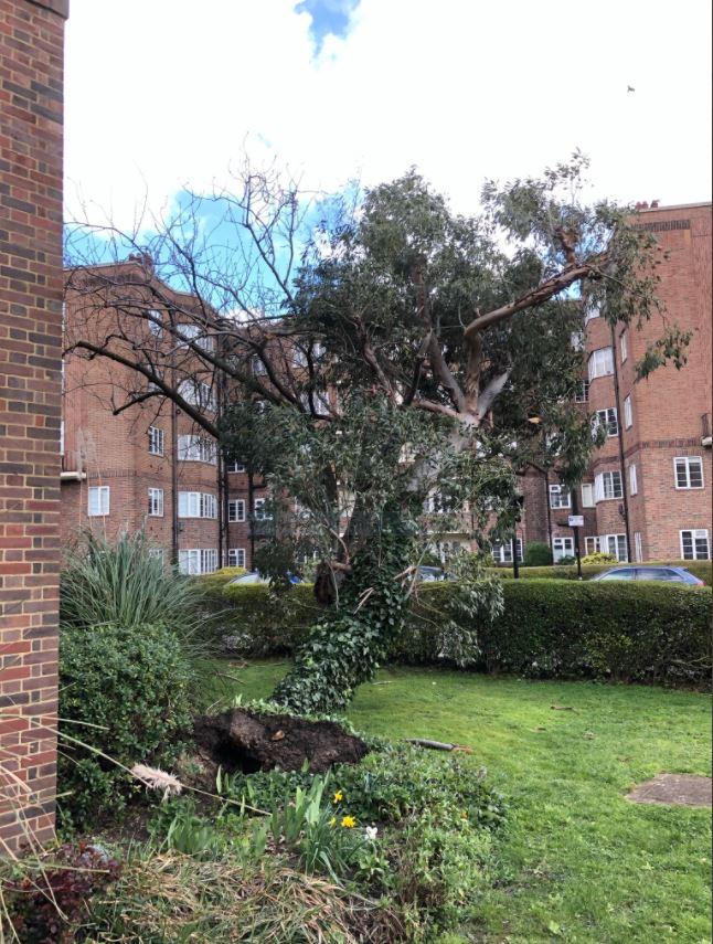Chiswick Village tree 4
