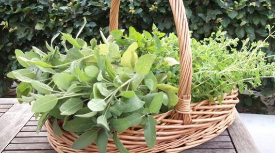 Hen Corner herbs