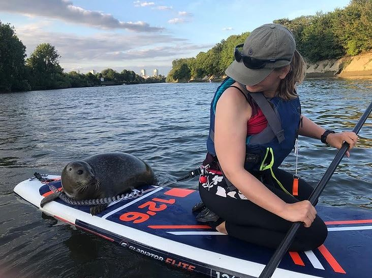 Seal on a paddleboard - Active 360