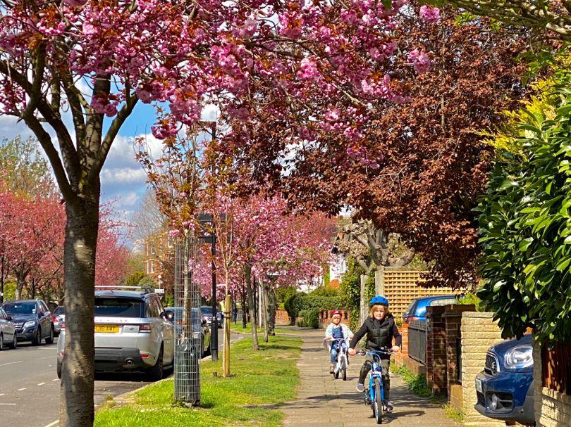 Staveley Rd blossom April 5 - Jennifer Griffiths_web