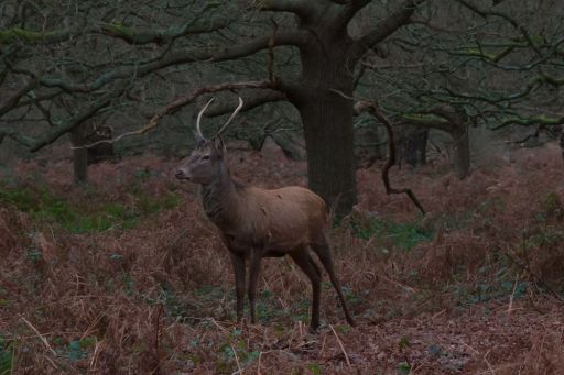 A28 - Richmond wild life - Animals