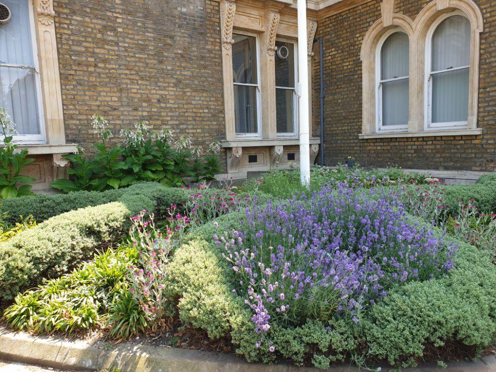 Abundance London Town Hall garden 2_web