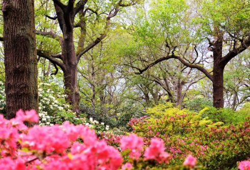 LS06 - Spring Glory - Landscapes & Seascapes