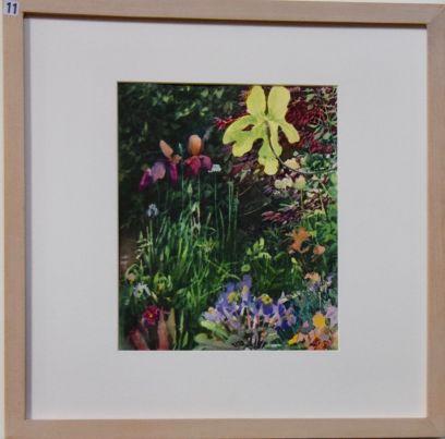 Liz Butler, Sunshine through the Fig Leaf - UID11
