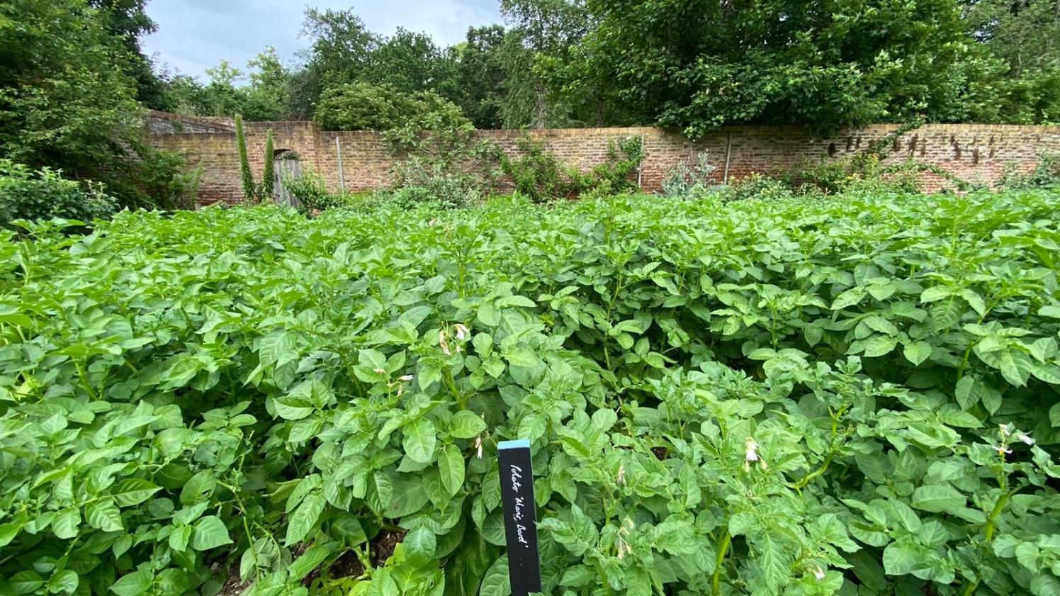 Chiswick House Kitchen Garden1