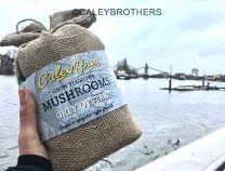 Caley Brothers Mushroom growing workshop