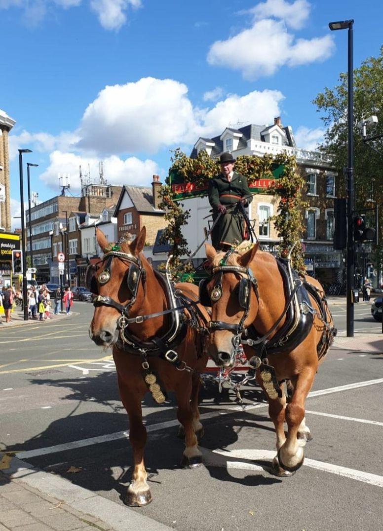 Shire horses - Joanna Raikes_crop_web