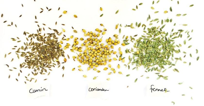 Cumin Coriander & Fennel Seeds #chitchaatchai