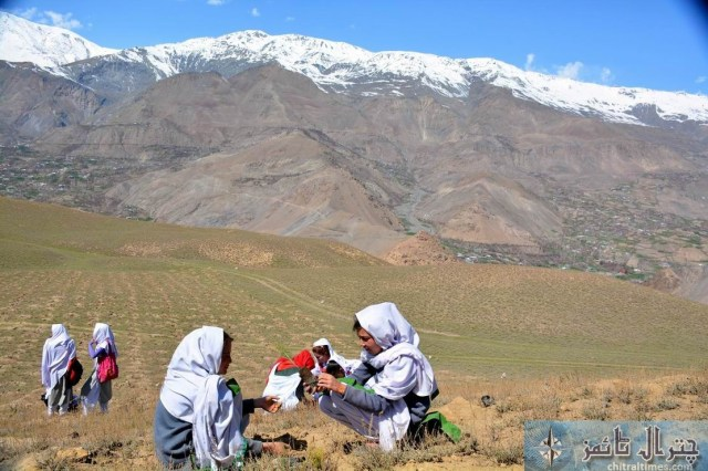 Chitral students are participating in a plantation campaign raised by District Administration and Forest department in Qaqlasht Mastuj pic by Saif ur Rehman Aziz2