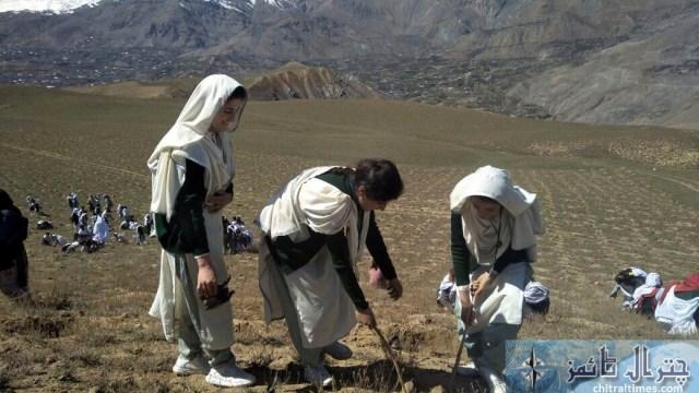 kaghlasht plantation chitral 3