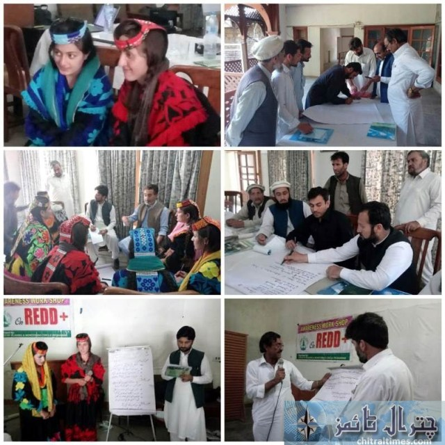 red plus program for chitral forestry area
