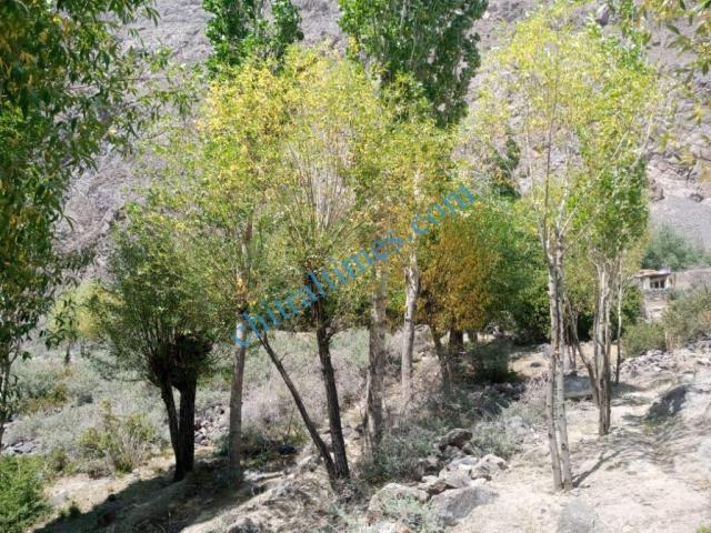 chitraltimes gochgal raman laspur water shortage2