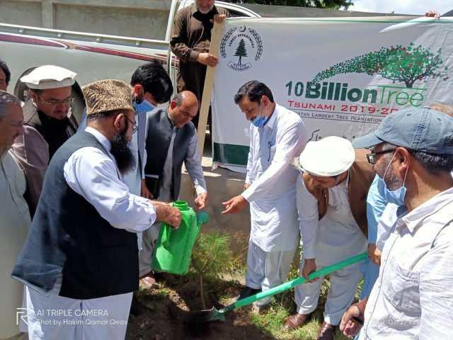 chitraltimes upper chitral plantation campaign 1