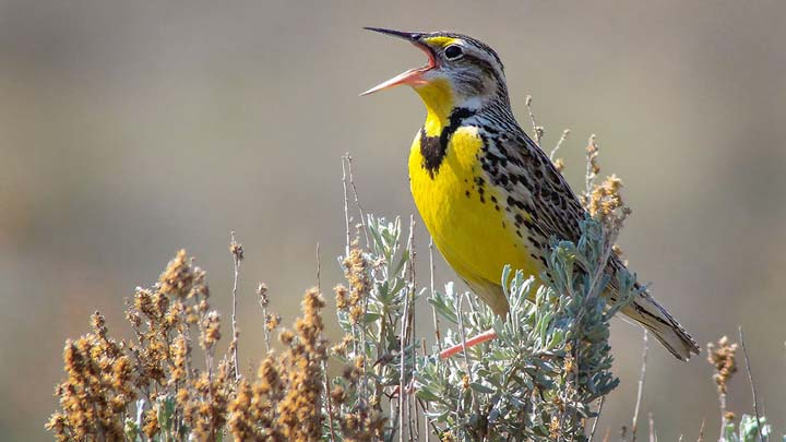 Around the world, birds are in crisis