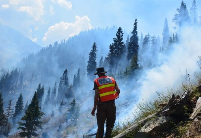 Forest fire partially put out in Drosh Gol