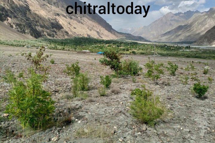 Nigahbans in Upper Chitral without pay khotanlasht