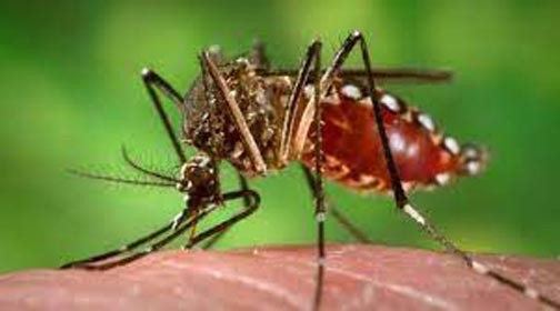 Dengue case emerges in Chitral