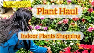 Plant Haul Indoor plants shopping Delhi India