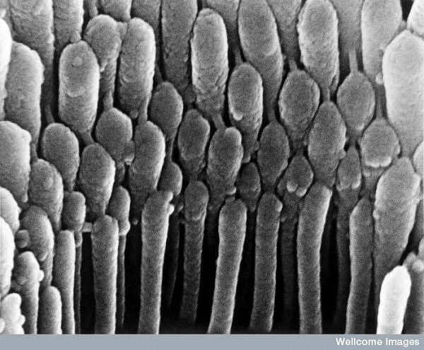 15 microscopic images from inside the human body (4/6)