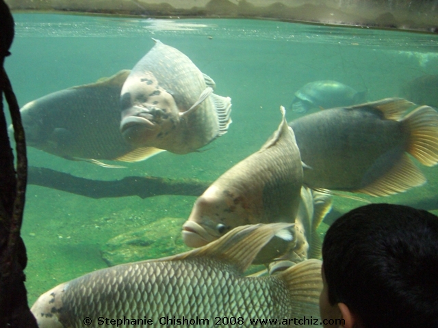 Onward to the AWESOME Fish Pond!!  Yes there are amazing Fish @ the Bronx Zoo