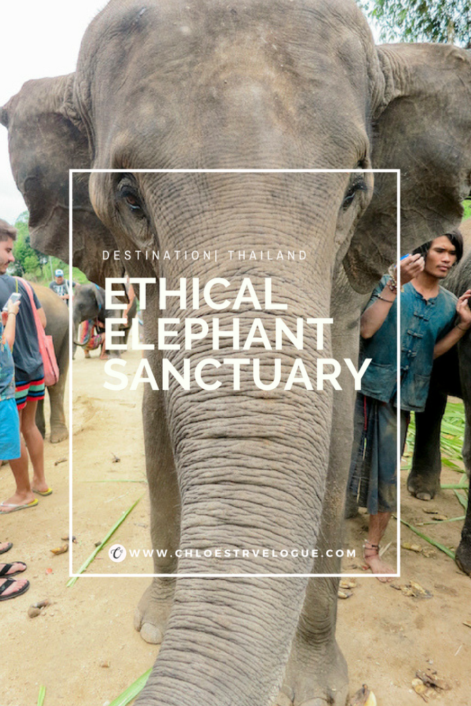 Ethical Elephant Sanctuary in Chiang Mai | Don't ride an elephant. Volunteer at ethical elephant sanctuary. | www.chloestravelogue.com #Thailand #ChiangMai #elephantsanctuary #EthicalAnimalExperience #elephantbathing