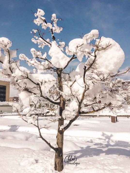 Things to Do in Toyama in Winter | Toyama Castle | #Toyama #富山