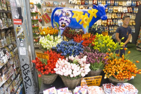 Amsterdam Itinerary Day 1 (Bucket List) | Shop Tulips at Bloemenmarket - Amsterdam's floating flower market | #Amsterdam #Holland #AmsterdamItinerary #AmsterdamThingstoDo #AmsterdamBucketList #Bloemenmarket #Tulip #iAmsterdam