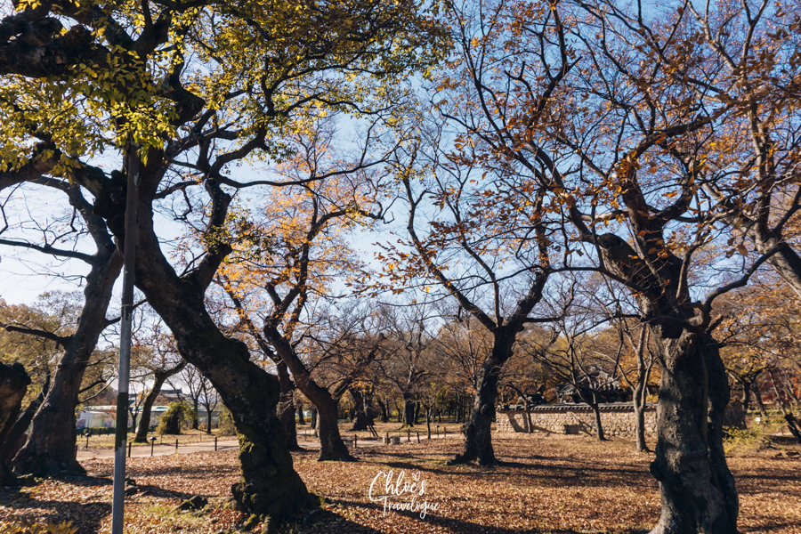 Things to Do in Gyeongju, South Korea - #13. Gyerim Forest: Silla's sacred place | #Gyeongju #SouthKorea #Korea #KoreaTravel #AsiaTravel #ThingstodoinKorea #UNESCOWorldHeritageSites